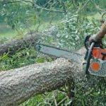 Illegal Chainsaws Remain Hidden In Saravan