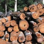 Thailand Seizes Lumber Enroute from Laos