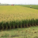 Brunei Eyes Rice Purchase From Laos