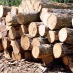 Officers Seize Bus, Truck Loaded with Illegal Timber