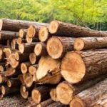 PM Discourages Timber Use on Farms