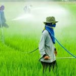 Pesticide Use Popular among Local Farmers