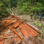 Laos, Vietnam Extend Partnership to Combat Illegal Logging, Poaching