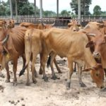 Law Amendments to Enhance Livestock Industry, Food Hygiene