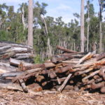 PM's Order Poses Positive Outcomes for Lao Forests