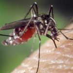 Super Malaria Emerges as a Global Threat