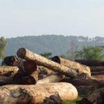 Authorities Order Closure of 253 Furniture Factories in Savannakhet