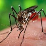 Dengue Fever Thriving in the Capital