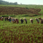 Laos and IRRI Maintains Partnership in Food Security