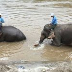 Lao Elephants Sent to China