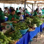 Vientiane Organic Farmers Going Strong