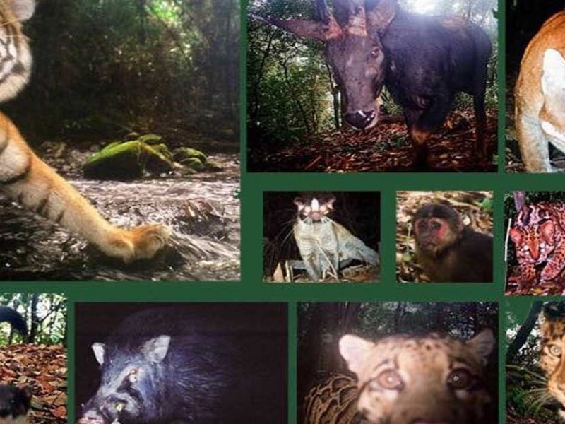 PM Order against Protected Wildlife Trafficking