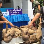 Smuggled Pangolins from Laos Seized in Mekong River