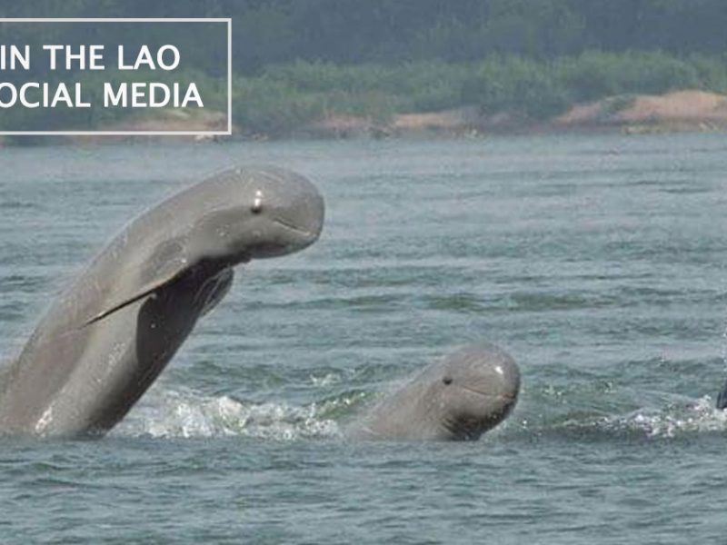 Dolphins in the Lao Social Media