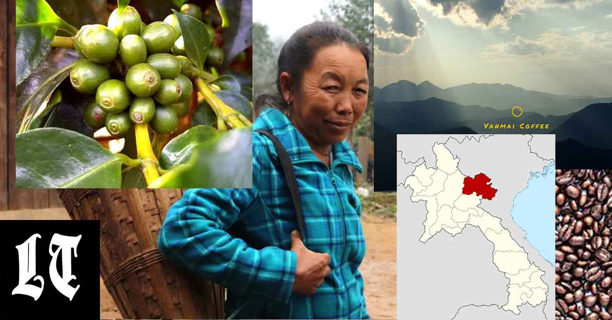 Coffee farmer Ms Her from Huaphan.