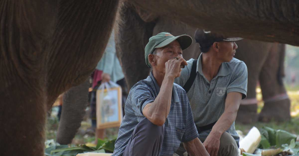 Laos Mahout