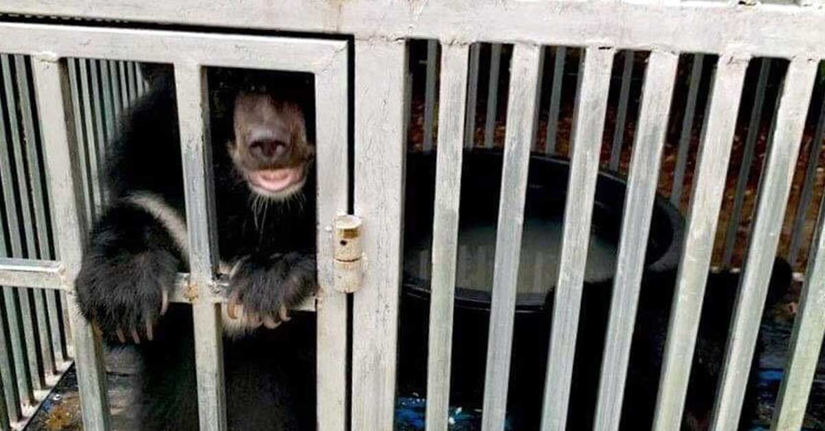 Five Asiatic Black Bears Rescued in Laos (Photo: Free the Bears)